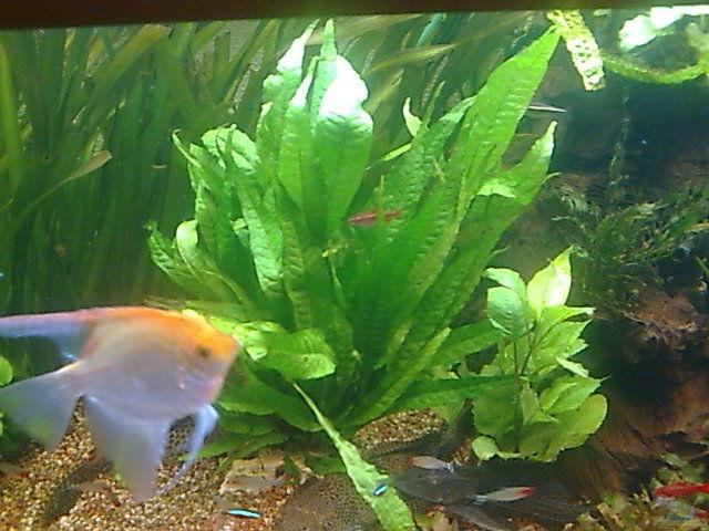 Mother/XL Aquarium Plants